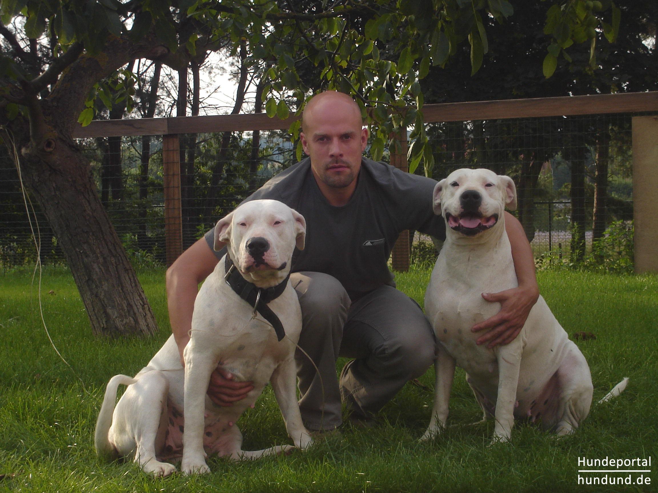 Dogo Argentino Argentinische Dogge Foto 39975 Hundund De