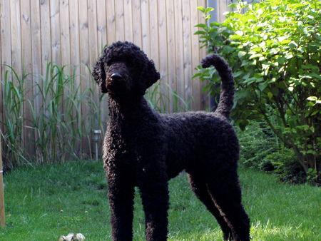 Wie Du Deinen Garten Hundegerecht Gestaltest Zaun Pflanzen Wasser