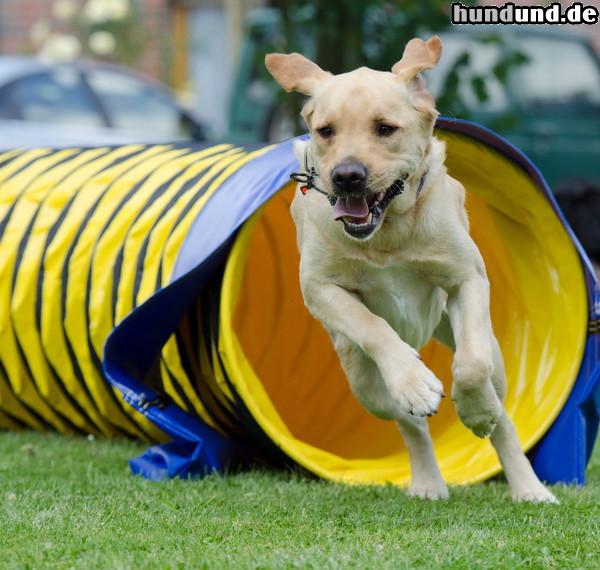 Agility Hunde
