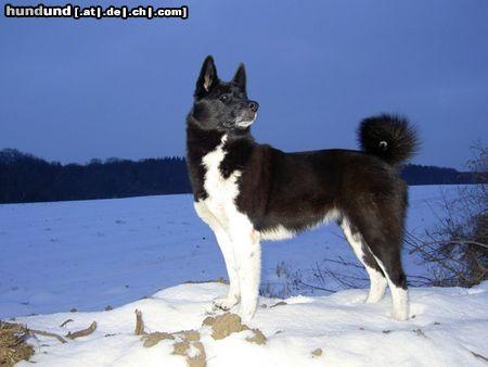 Hund Auf Russisch