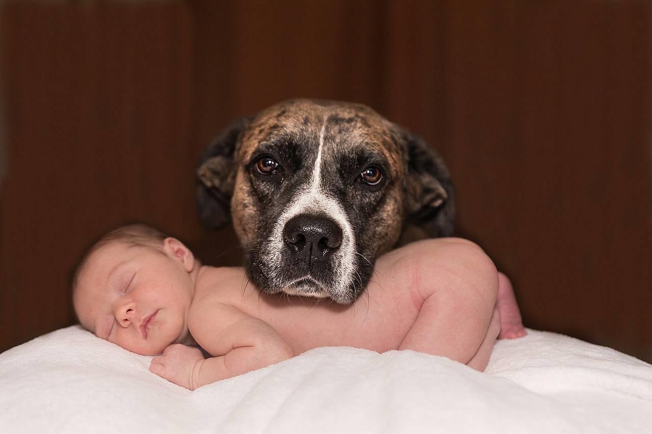 Baby und Hund: Tipps für ein gutes Zusammenleben