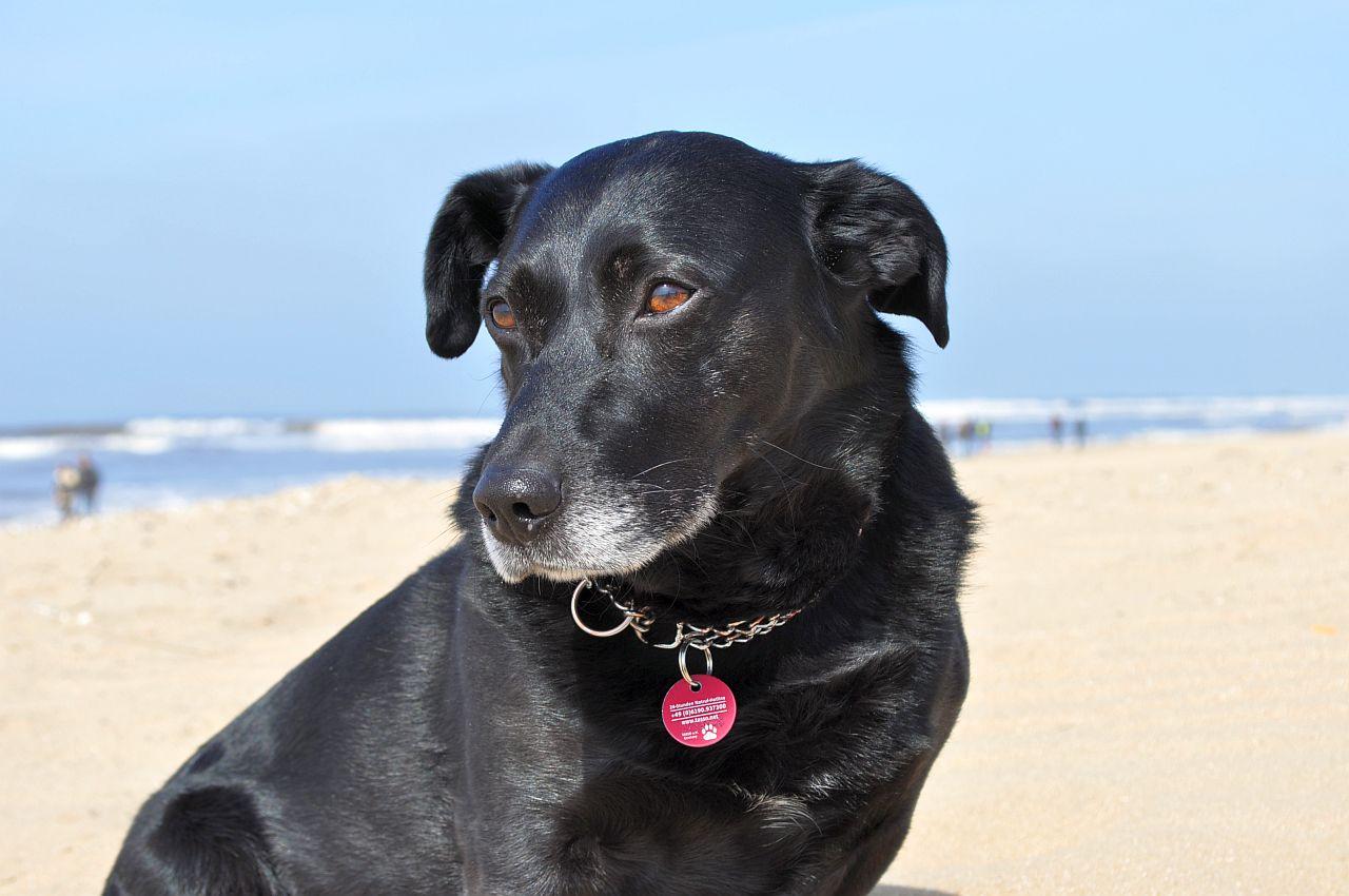 tierschutzexperten raten vom urlaub mit hund in d nemark ab hundeurlaub reisen. Black Bedroom Furniture Sets. Home Design Ideas
