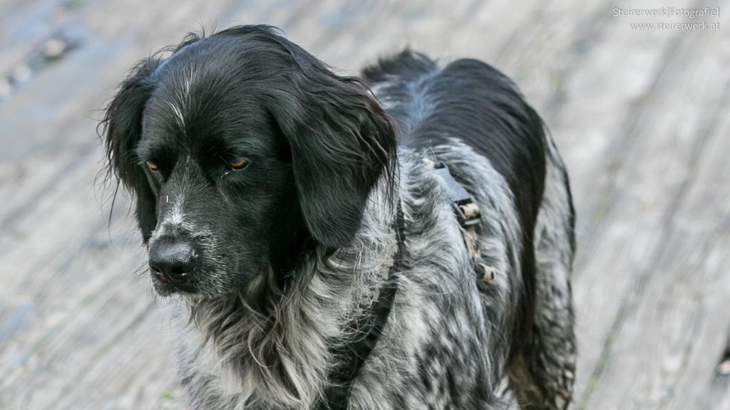 Haustier mit Demenz: Was Tierhalter beachten sollten