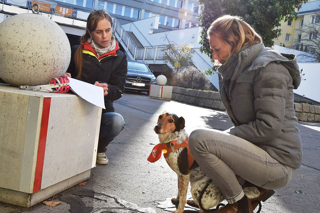 Hundesteuer sparen mit freiwilligen Hundeführschein in Wien
