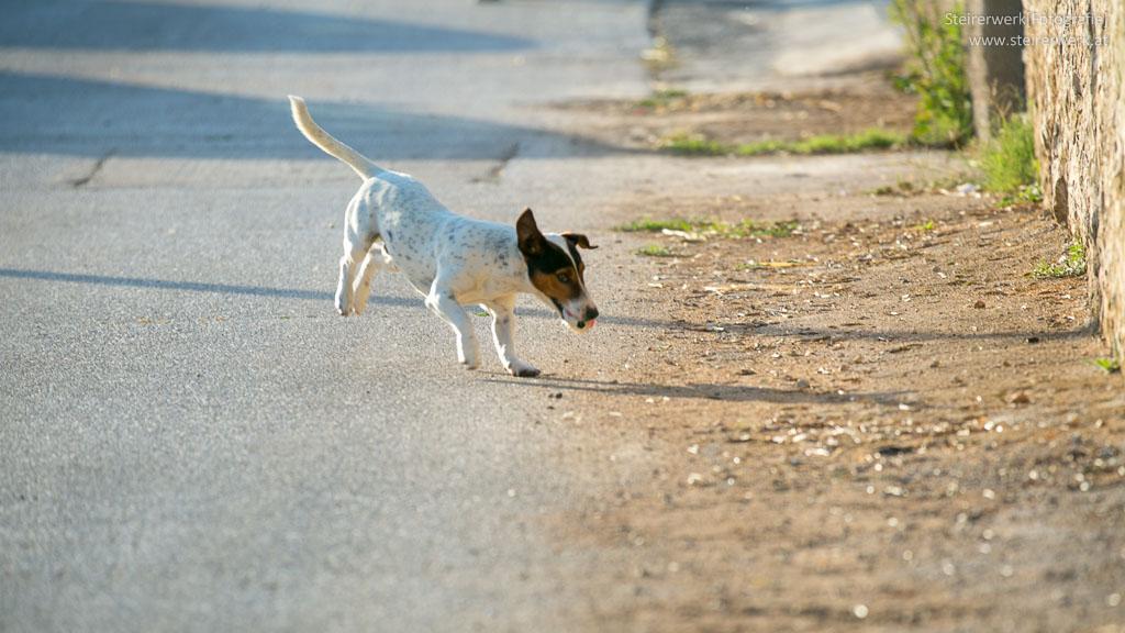 Hunde Aus Dem Ausland Kaufen
