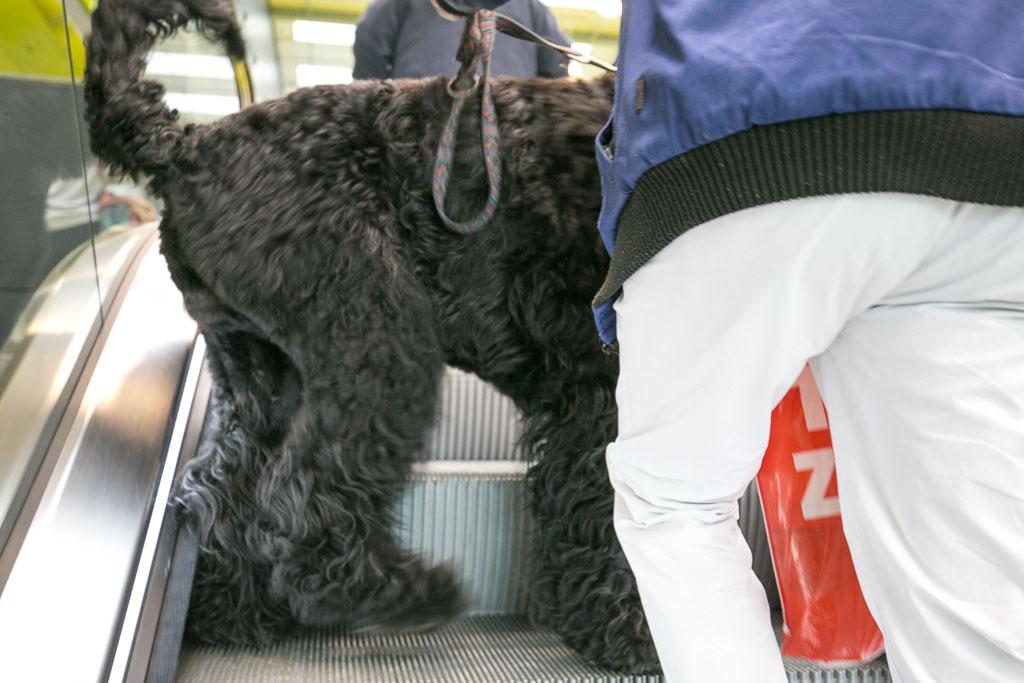 Hunde auf der Rolltreppe