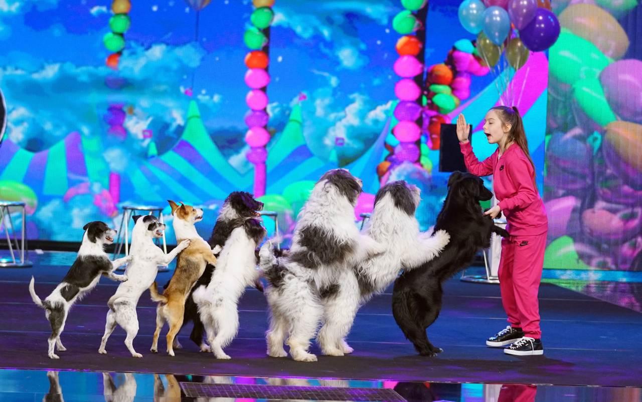 Hunde gewinnen Supertalent RTL Show