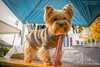 Hundemäntel: Vor- und Nachteile von Hundebekleidung