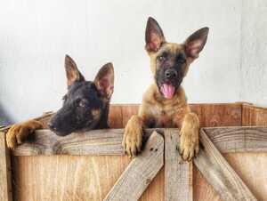 EU-Tiergesundheitsgesetz tritt in Kraft