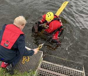 Feuerwehr rettet Hund aus der Ruhr