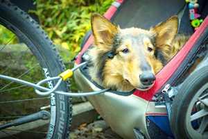 Hundeanhänger für Fahrräder