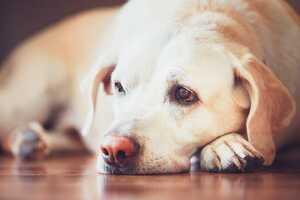Wenn der Hund krank wird: Diese Kosten kommen auf Hundehalter zu