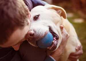 Wichtige Gesetze für Hundehalter: geltende Rechte und Pflichten