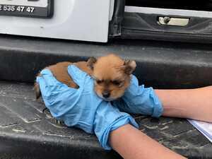 Hundewelpen aus Transporter verkauft
