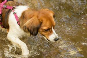 Baden mit Hund: So fühlen sich Hunde im Wasser pudelwohl