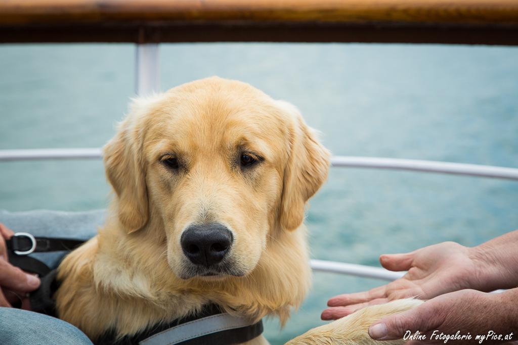 Hund Urlaubsreise Deutschland