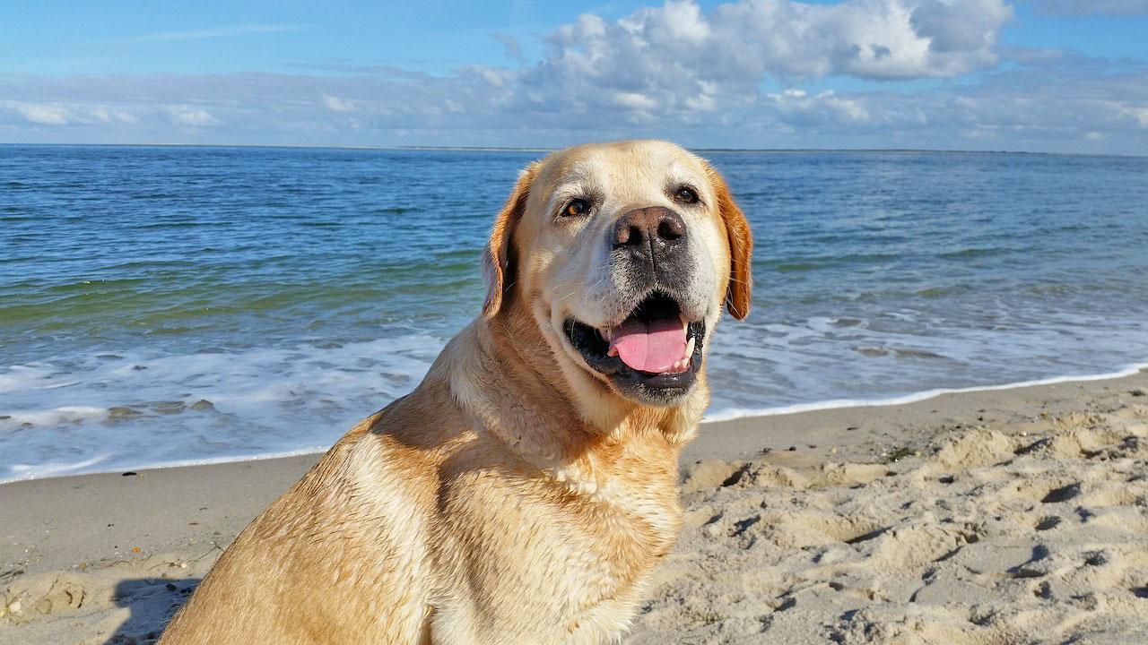 Urlaub mit Hund am Meer - Worauf achten?