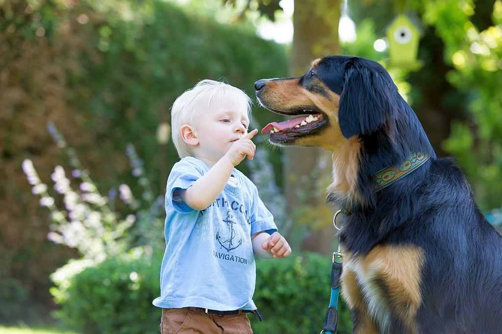 Zahngesundheit bei Hunden ist wichtig